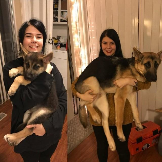 17 собак, которые выросли и стали больше хозяев, но в душе так и остались щеночками