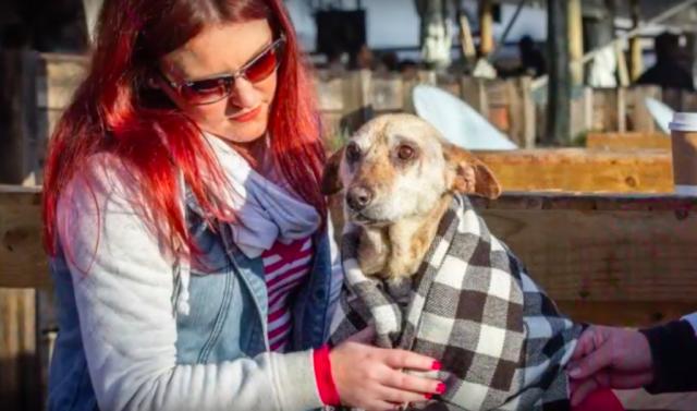 Старая собака остановила ветеринара перед эвтаназией. Видео...
