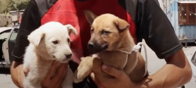 Дорожное приключение: как пара из Голландии спасала собачек