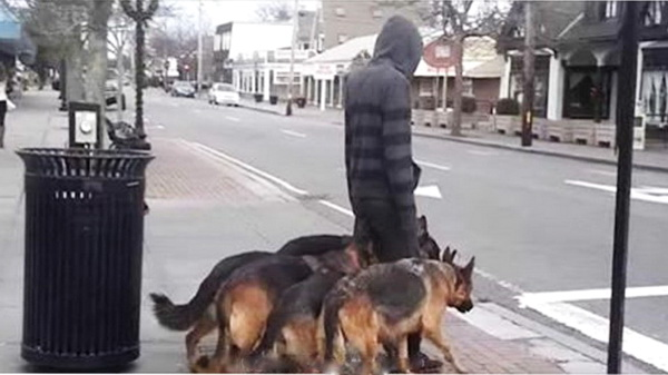 Видео: Кажется, будто парень ведет на поводке 5 овчарок