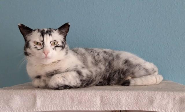 Немка нашла двух чёрно-белых кошек и взяла их себе. Но через пару месяцев одна из них начала белеть