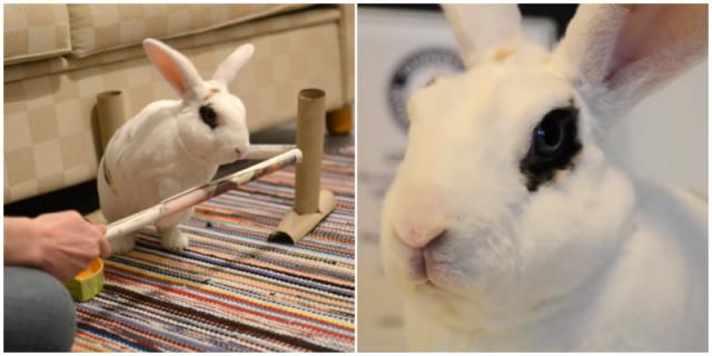 Видео: Кролик попал в Книгу рекордов Гинесса после того, как сделал 20 трюков за минуту