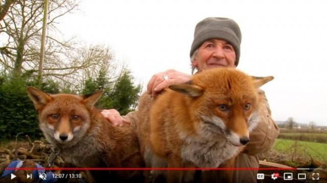Мужчина хотел отпустить выращенных им лис в дикую природу. А они вернулись и остались жить с ним!Видео...