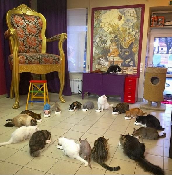 Видео: Котокафе — рай для любителей кошек