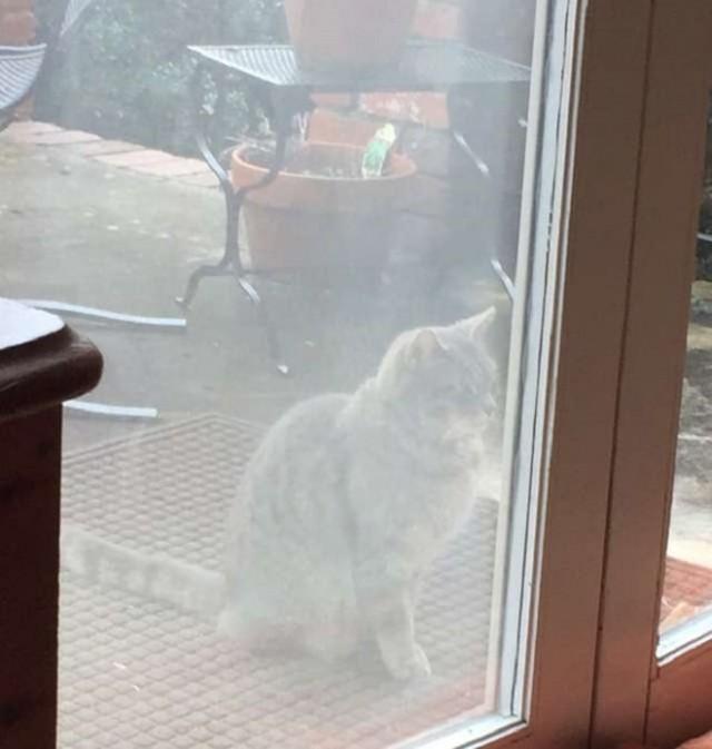 «А она все также ждет…»: грустная кошка появляется на пороге чужого дома, заглядывая внутрь