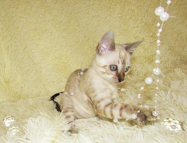 Котенок — не игрушка ! Это маленький ребенок, нуждающийся в любви и заботе !