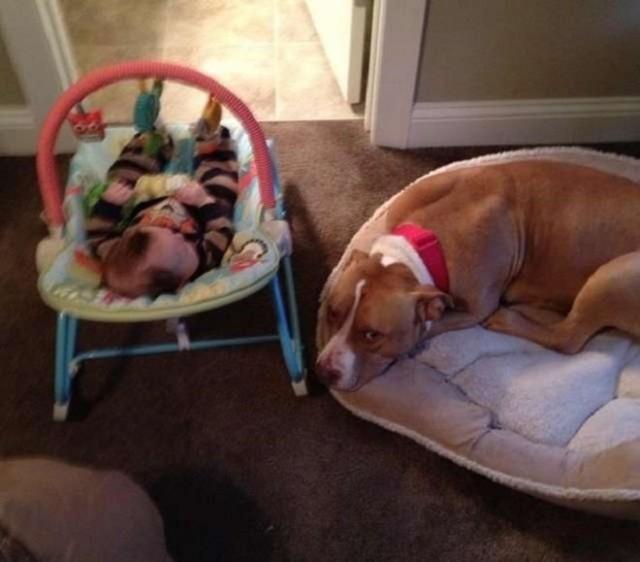 После смерти собаки родители отказались заводить питомца, но у их сынишки был свой план