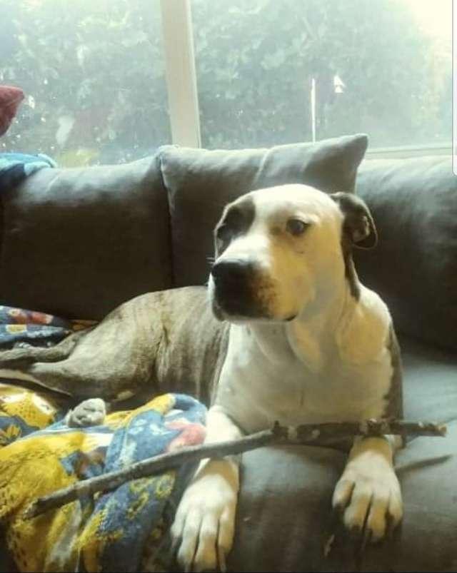 После 8 лет разлуки собака не могла поверить, что встретила свою хозяйку