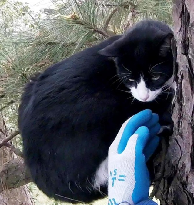 Видео: Этот супер-спасатель приезжает по первому звонку: посмотрите, на что он готов ради кошек!