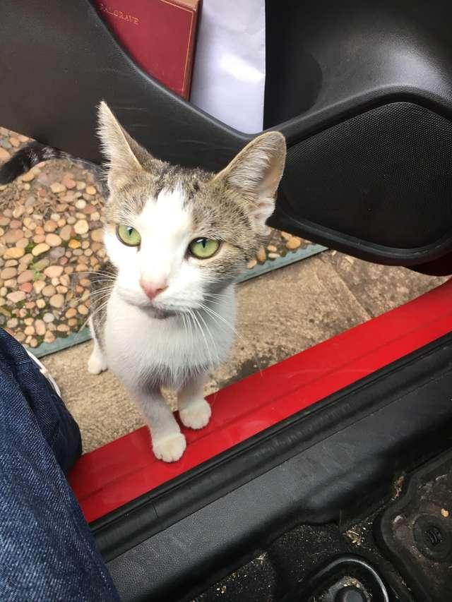 Семья выставила беременную кошку на улицу, заведя собак – кошка пришла за помощью к порогу своего любимого соседа