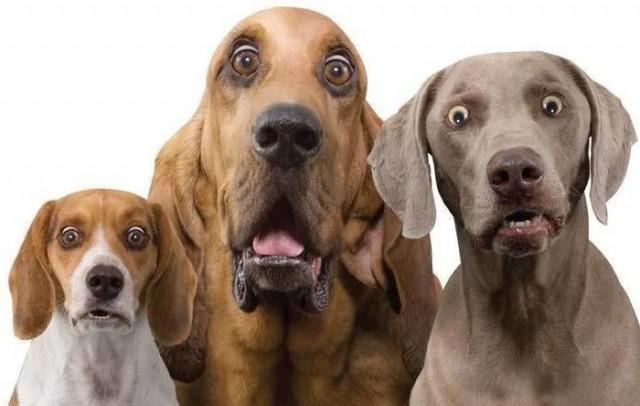 Собака – этороскошь: почему вГермании нетбездомных животных
