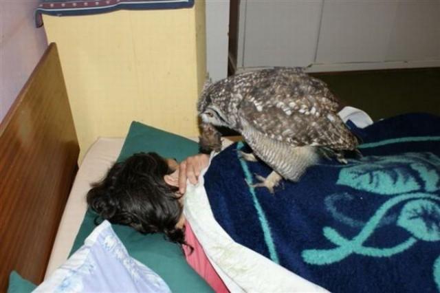 Парень подобрал раненую сову, вылечил ее, ивоткаконаегоотблагодарила