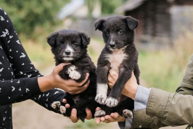За двумя маленькими щеночками с отравой охотились жители деревни