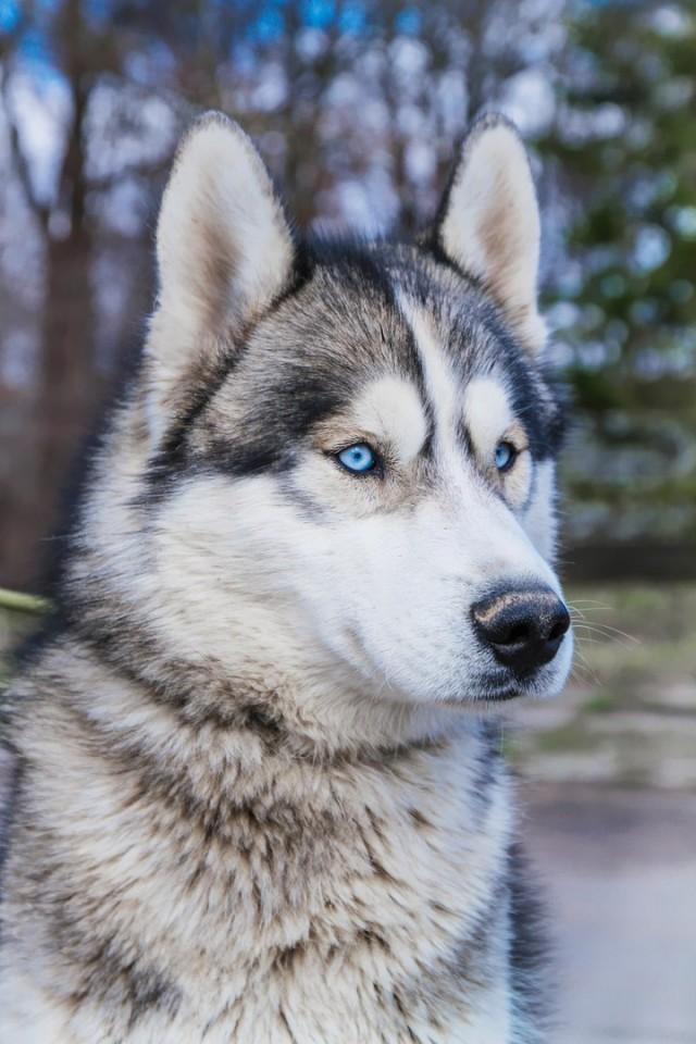Собака удивительной красоты сама пришла проситься в приют (11фото)