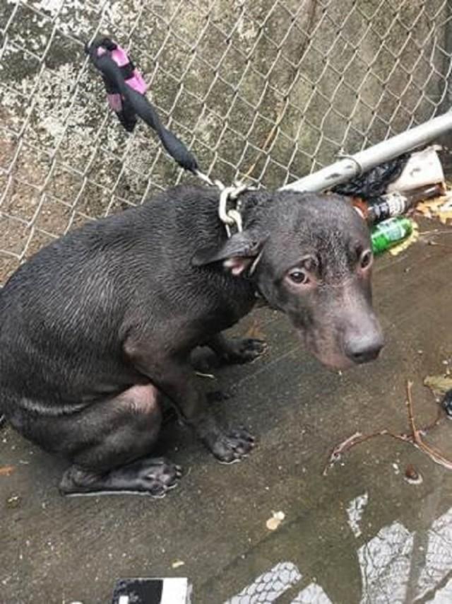 Пес сидел в луже и дрожал от холода: он замерз, но веревка не давала ему уйти