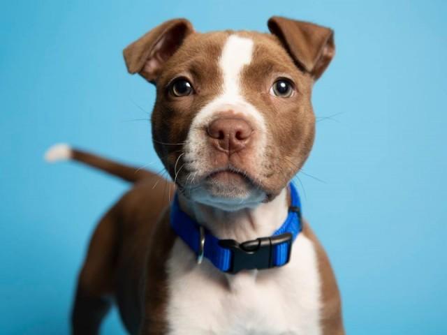 7-недельного беспомощного щенка нашли с распухшими лапками