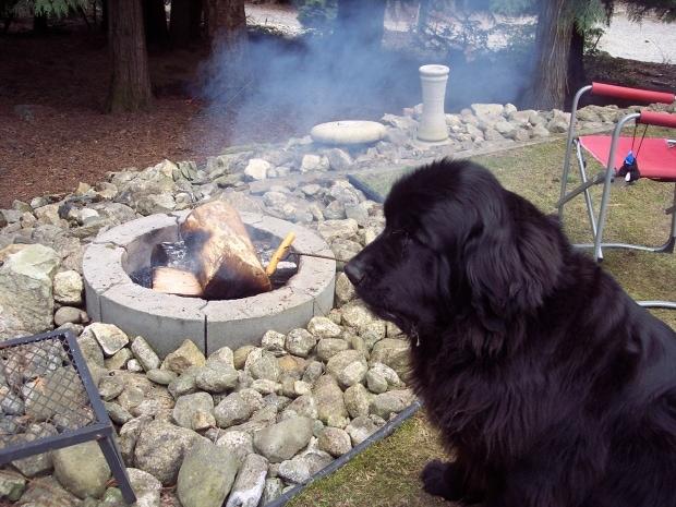 Видео: Эта собака почти как «муж на час» — придёт и сделает всё как надо. Убрать снег? Легко! Пожарить сосисочки? Да без проблем!