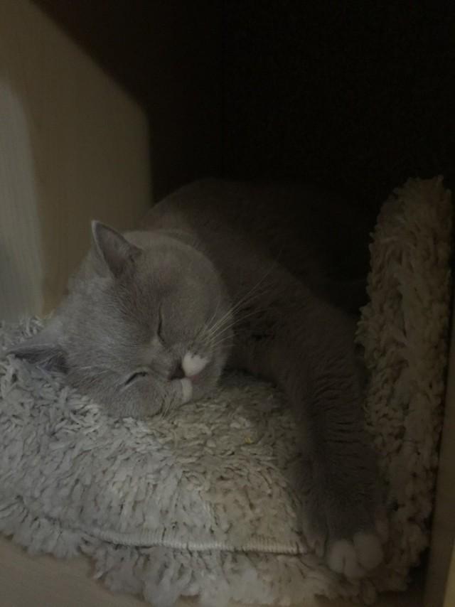 Хозяин проследил за котом с помощью фитнес-браслета и рассказал, «сколько спит эта пушистая сволочь»
