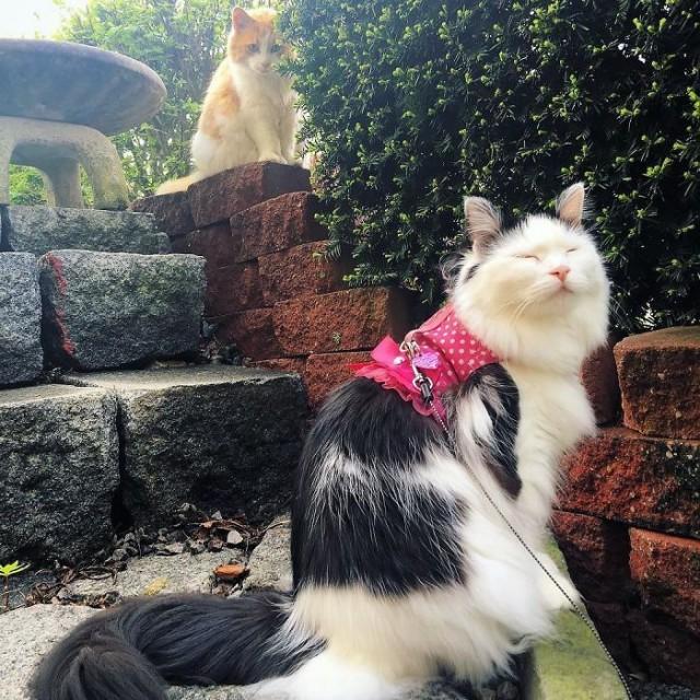 Влюбленному котику понадобилось два года, чтобы добиться взаимности от соседки