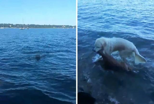 Этот пёс, рискуя жизнью, бросился в воду, и вот что он вытащил на берег - Видео!