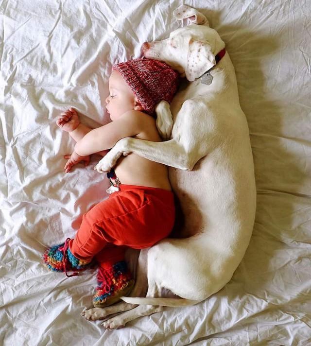 Собака с тяжёлым прошлым наконец нашла себе лучшего друга, и их фотографии заставят вас поверить в добро. 17 трогательных Фото!