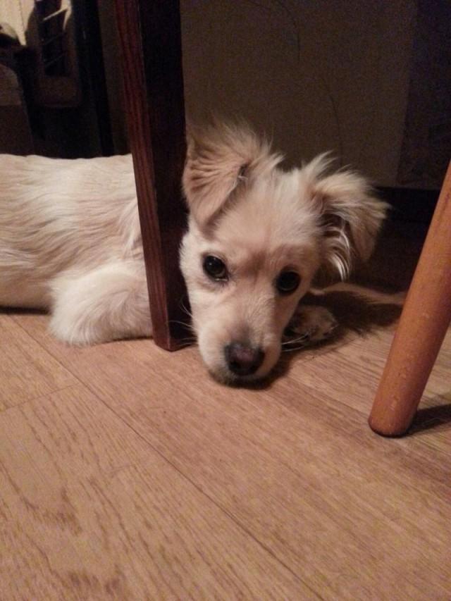 Возле березы лежал маленький щенок, жалобно попискивая