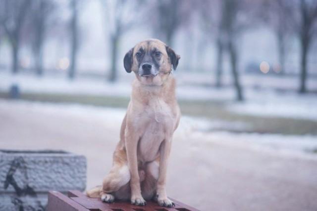 Две неразлучные собаки оказались на улице, потому что стали не нужны хозяевам