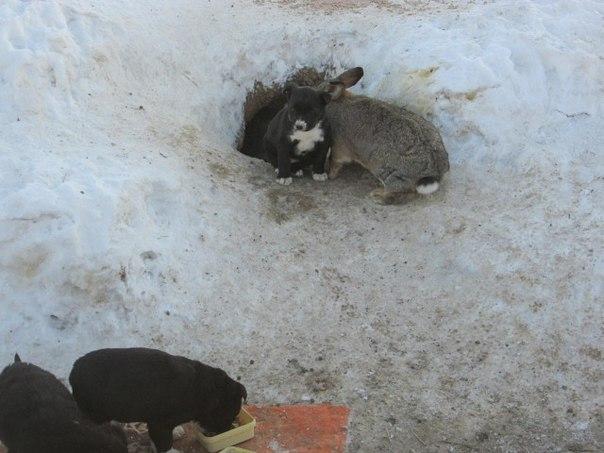 Нелюди застрелили ощенившуюся собаку. Неожиданный покровитель заменил щенкам мать