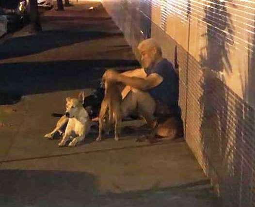 Когда бродягу забрали в больницу, все его собаки пришли и ждали его возле дверей стационара