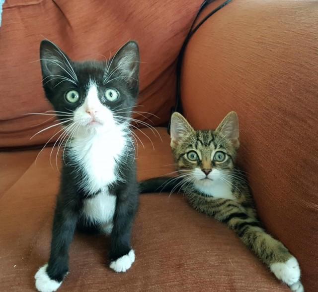 Четыре лапы на двоих: Котята родились с редким дефектом, но это не мешает им бегать и прыгать