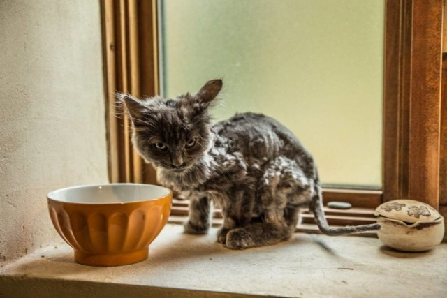 Как из скелетика Барли превратился в роскошного кота