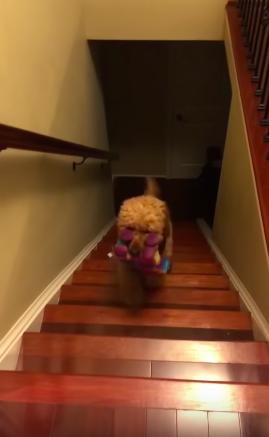 Видео: Пёсель Бентли каждый вечер совершает таинственный ритуал перед сном. И на пути к цели его ничто не остановит