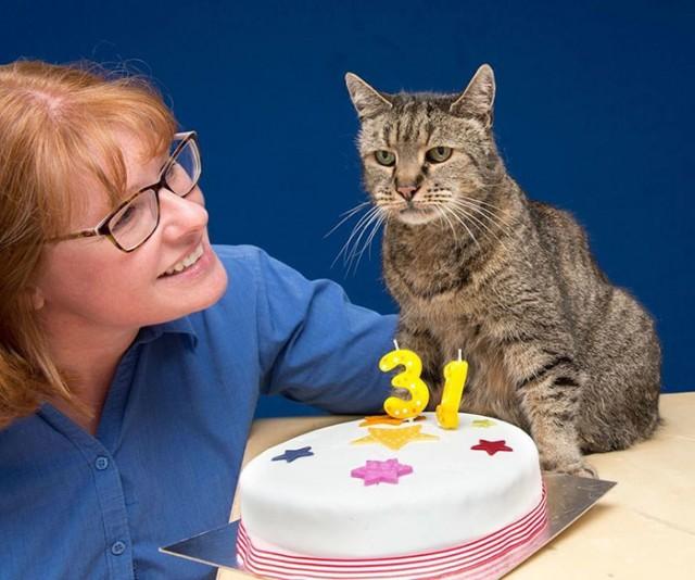 Старейший котвмире отпраздновал 31-ый день рождения, иунего ещеосталось много жизней (9фото+1гиф)
