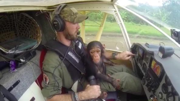 Видео, покорившее женщин! Мужественный лётчик, качающий на коленях любопытного детёныша шимпанзе… среди облаков!