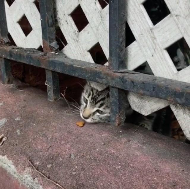Мужчина услышал громко плачущего котёнка за мусорным баком и решил спасти его, но не ожидал, что ему вскоре придётся вернуться