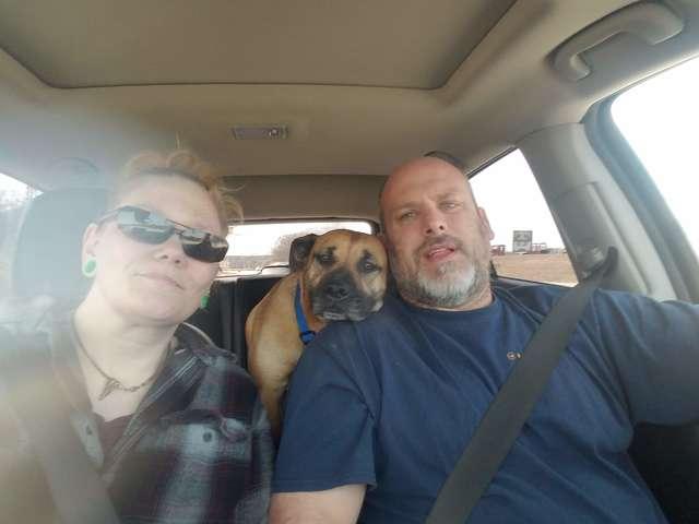 От отчаяния уличная собака запрыгнула в открытую дверь машины