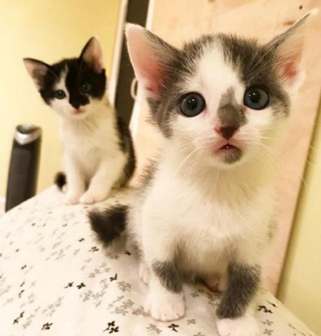 Осиротевшие котята жались друг к дружке на улице. Как пушистые комочки нашли «временного папу»