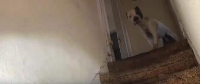 В заброшенном доме плакал пес, зовя людей на помощь