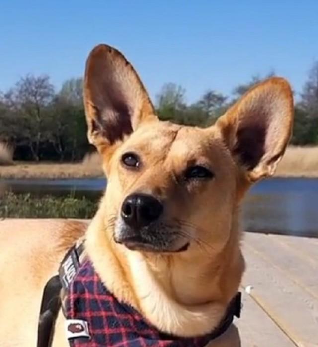 Собака страдала от зубной боли, но никто не замечал, что ей нужна помощь