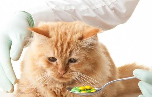 Лучший способ дать коту таблетку