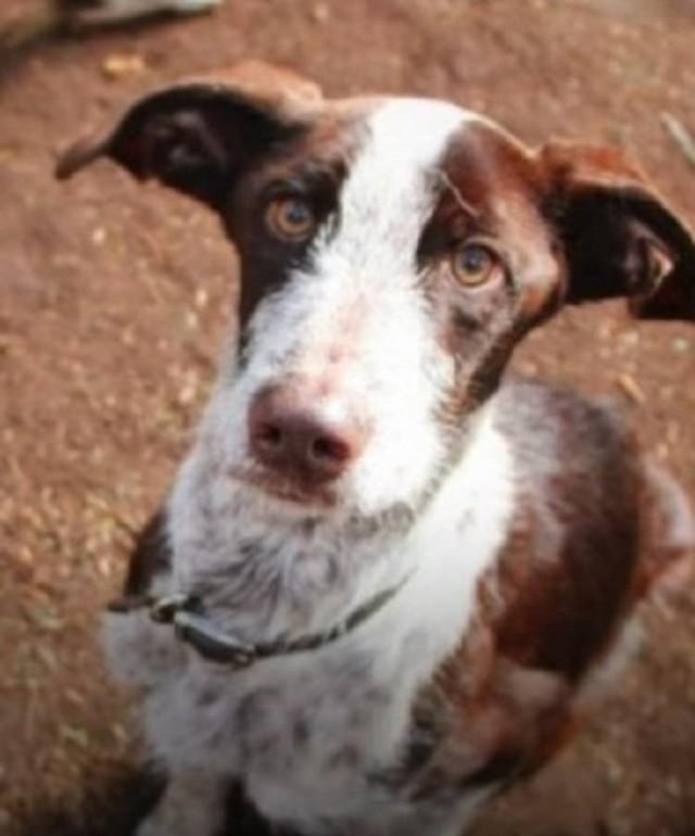 Пес из Кембриджа прожил 15 месяцев в лесной зоне, а вернувшись, оказался не нужен хозяевам