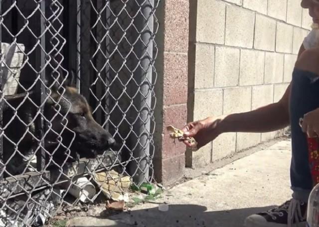 Собаку бросили без еды и воды на старой парковке, куда очень редко кто-то заходил