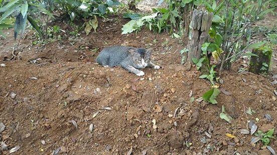 Мужчина оставляет еду и воду на могиле. Он понял, что кошка не похожа на животное, которое живет на улице.