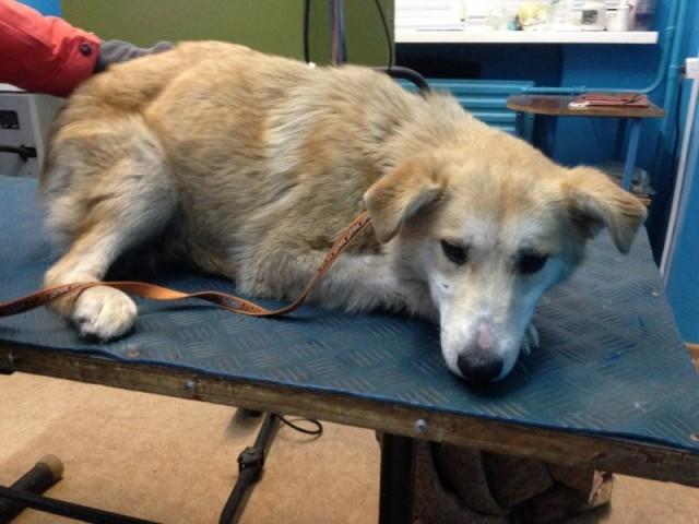 Одинокая собака не могла двигаться,неподвижно лежала в сугробе, и постоянно плакала от боли....