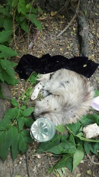 Котенок несколько дней лежал под окнами дома на палящем солнце
