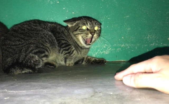 Видео: Кошка с шипением реагировала на всякого, кто был вблизи . Потребовался год, чтоб из глаз киски пропал ужас…
