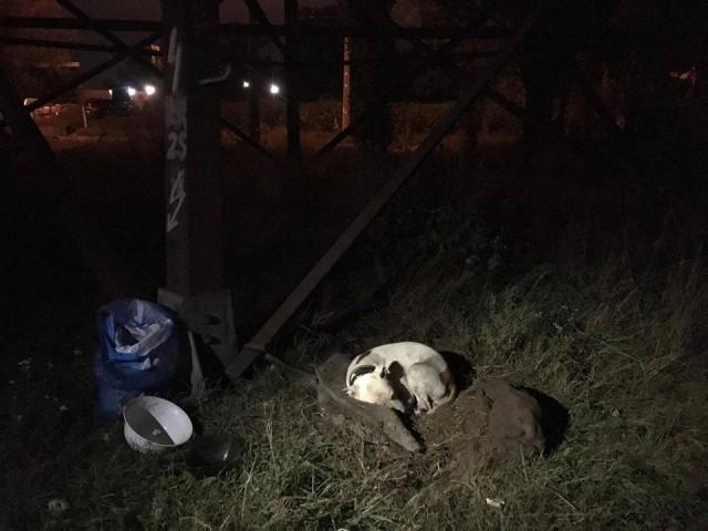 «С вещами — на выход!..» В Киеве собаку выставили из дома, привязав к столбу на пустыре