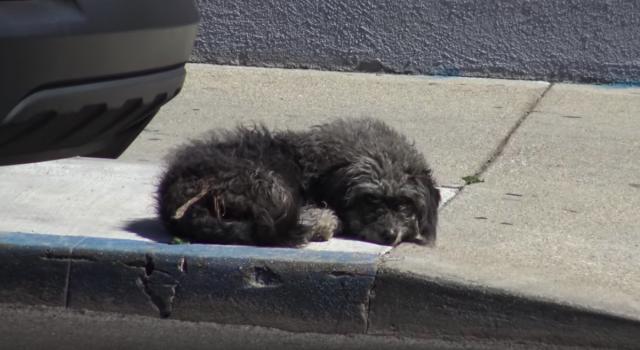 Грустная собака лежала посреди тротуара… Хорошо, что ее все-таки заметили! Видео!