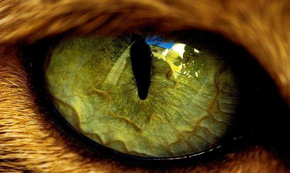 Как видят кошки наш прекрасный мир? Любопытные факты о кошачьем зрении.