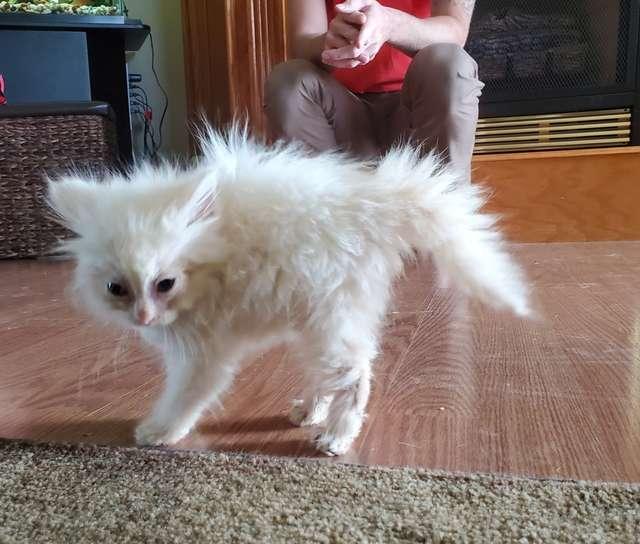 Миниатюрный котенок обладал невероятным талантом, о чем не догадывались хозяева